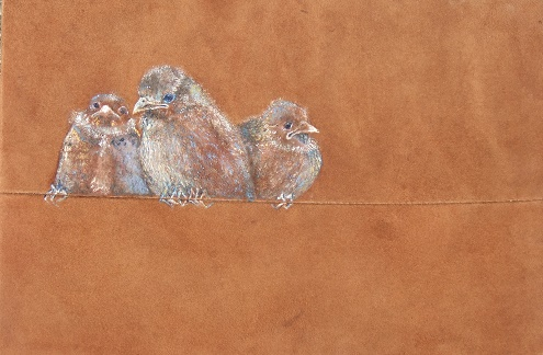 Bevy of birds in brown